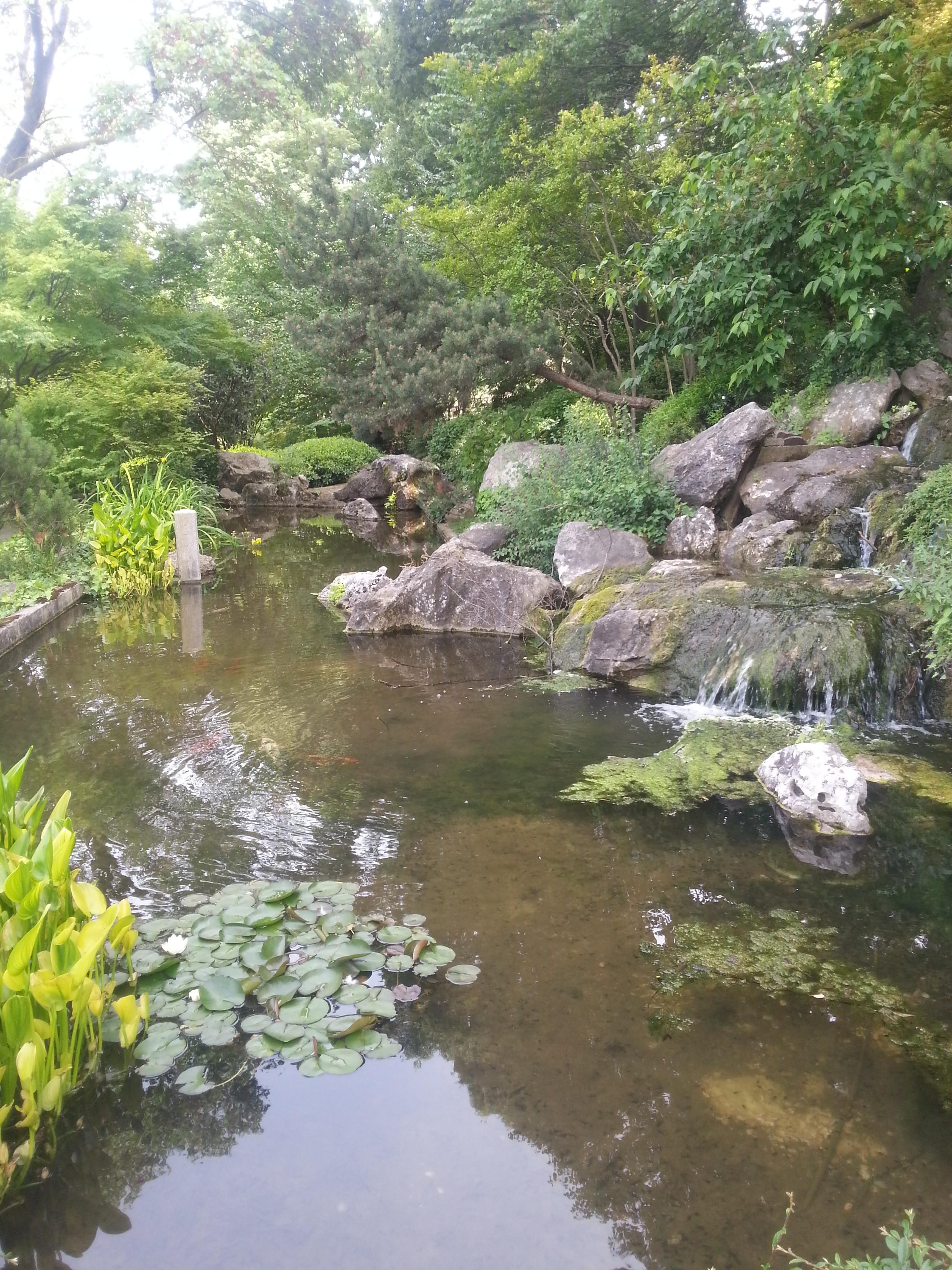 L 39 orto botanico un 39 esperienza sensoriale per tutti neapolis roma - Piante per giardino giapponese ...