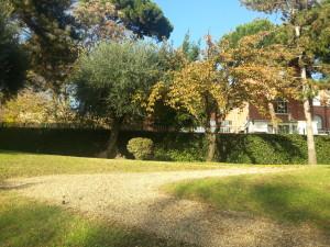 L'esperienza unica del giardino giapponese a Roma