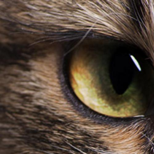 SuperCat Show 2016, la mostra felina internazionale